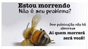 AS ABELHAS ESTÃO MORRENDO INTOXICADAS NO BRASIL