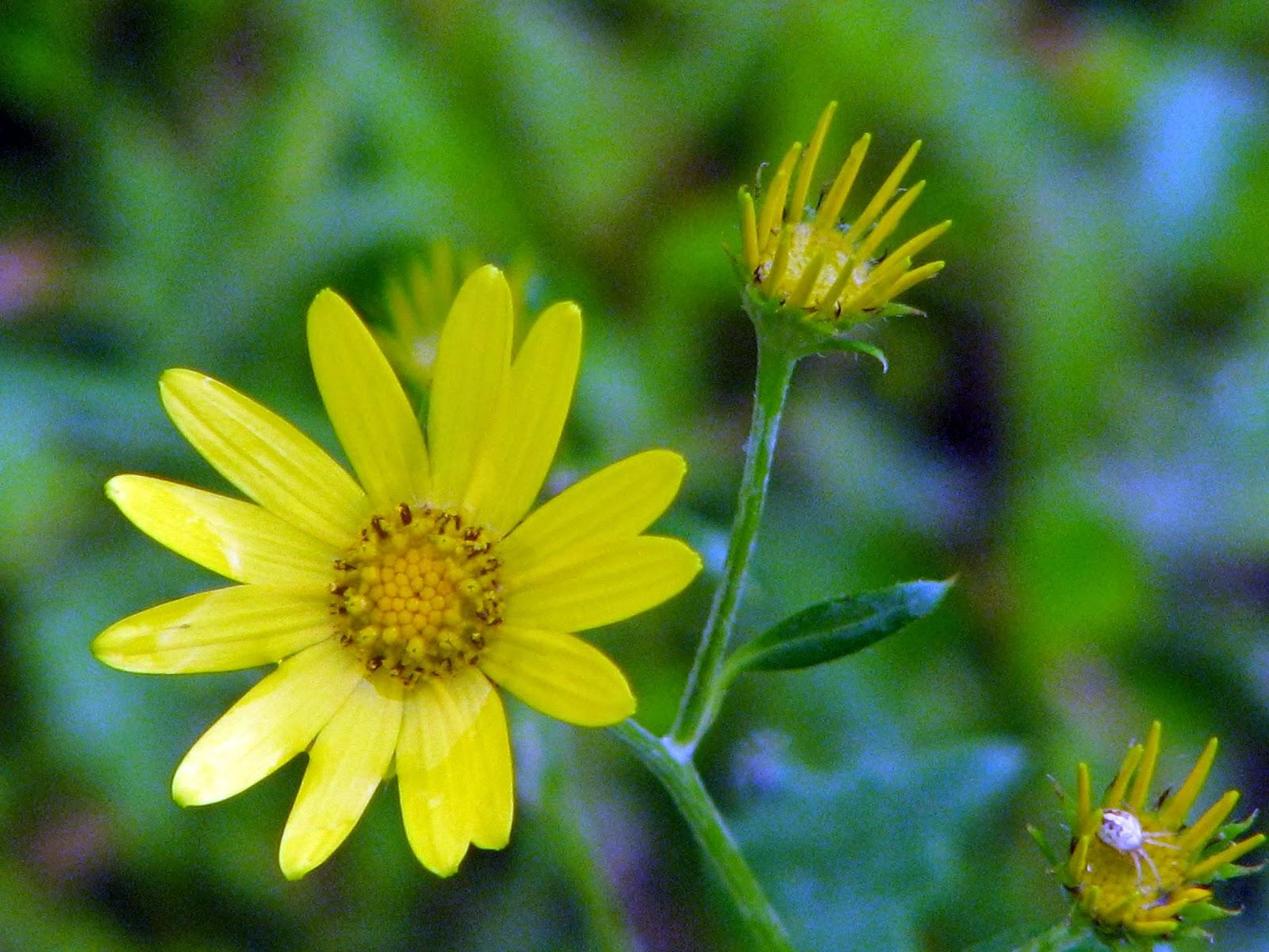 My Travel Adventures Ratangad Sonki Flower Special Trek To Jewel Fort