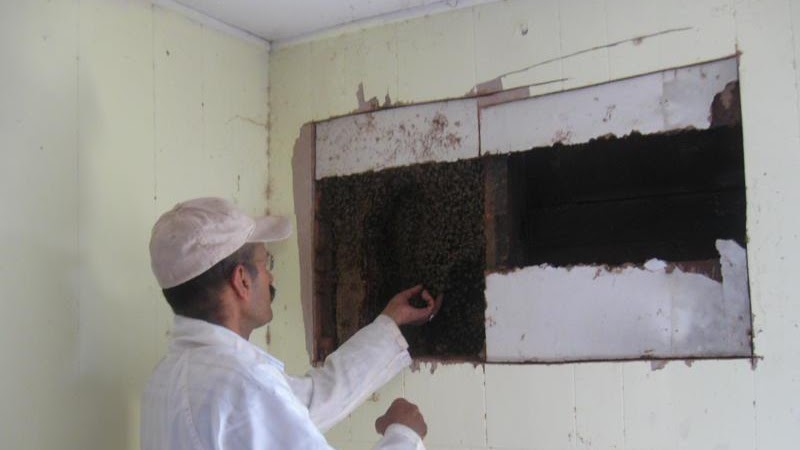 Beehive - Honey Bees In House