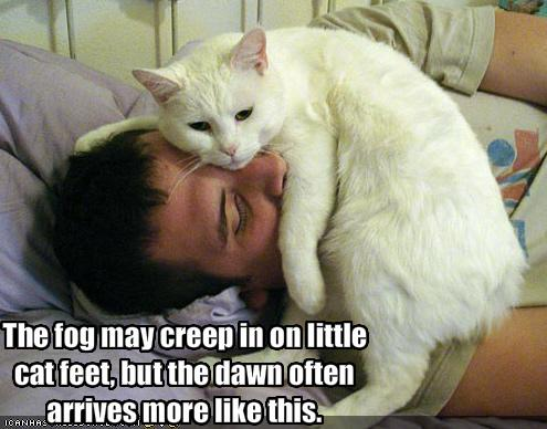 My Top Collection Funny cat pictures with captions 2