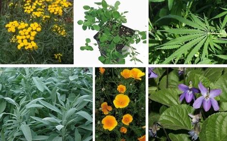 common herbs, flowers,
