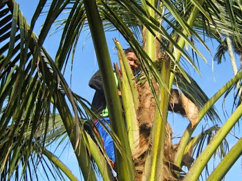 Ketupat Daun Kelapa Makanan Tradisi Pengikat Ukhwah