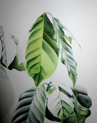 Coffee Leaves on the side