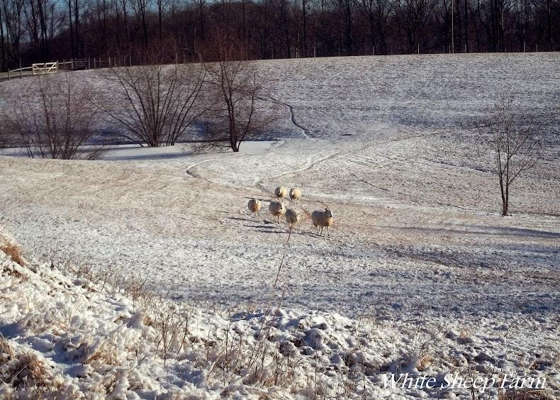 White Sheep Farm