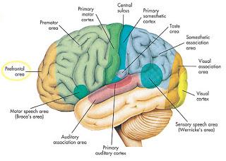 7 Misteri Unik Dan Aneh Dalam Otak Manusia