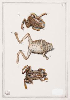 Frog Road kill kills roadkill