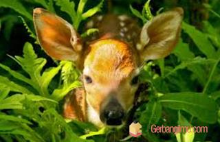 Perkembangan Makhluk Hidup Rangkuman materi hewan tumbuhan