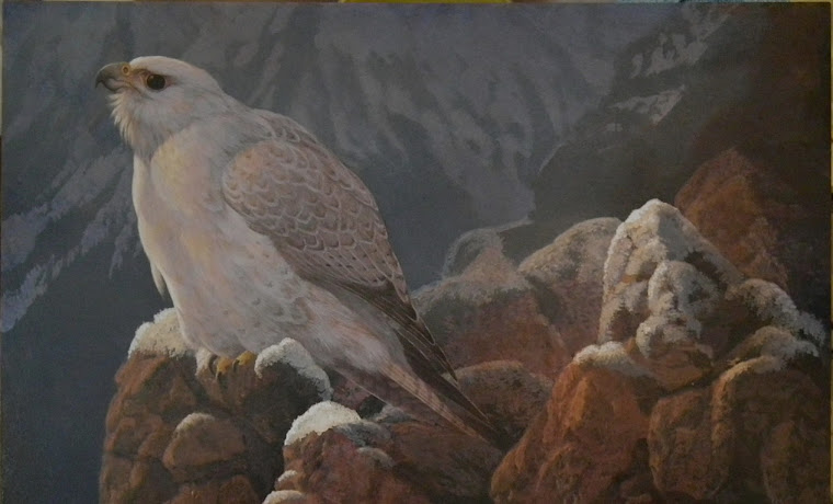 Gyrfalcon 16x20""