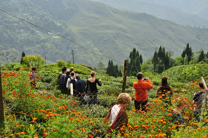 http://ntpindiatourism.com/himalayan-tranquility.html