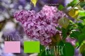http://craftfunsklep.blogspot.com/2014/05/wyzwanie-26-byy-maje-byy-bzy.html