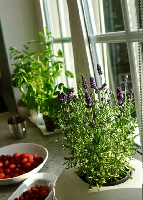 Gdansk sunday herbs