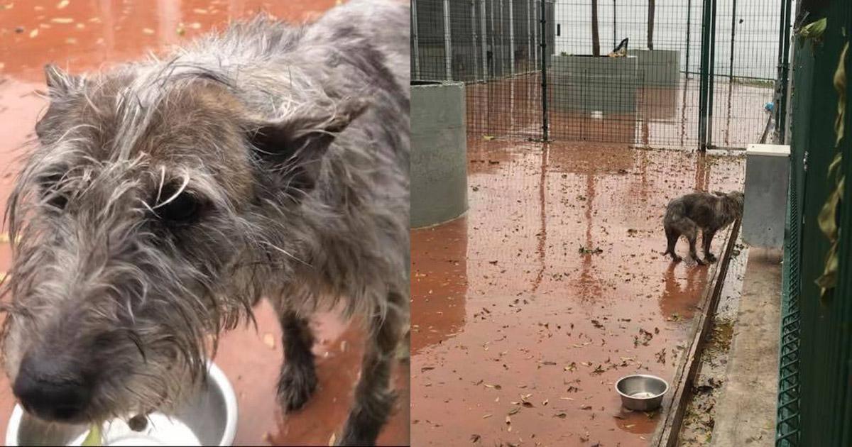 Rescaten a los perros de la perrera