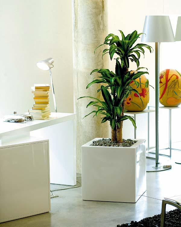 Residencial el palmar panam - Plantas para decorar interiores ...