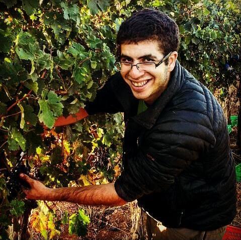 ייצור יין, חוויות יין וקולינריה.