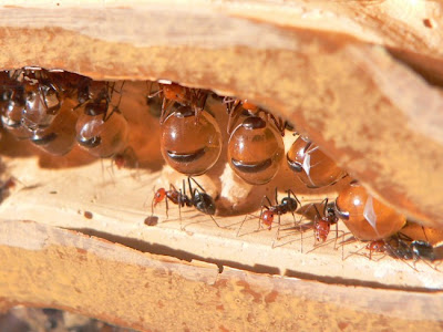 بالصور والفيديو: يجمع العسل ويعيش