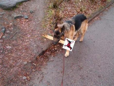 έξυπνος σκύλος +