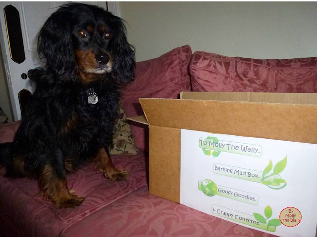 Molly The Wallys' Barking Mad Box 3!