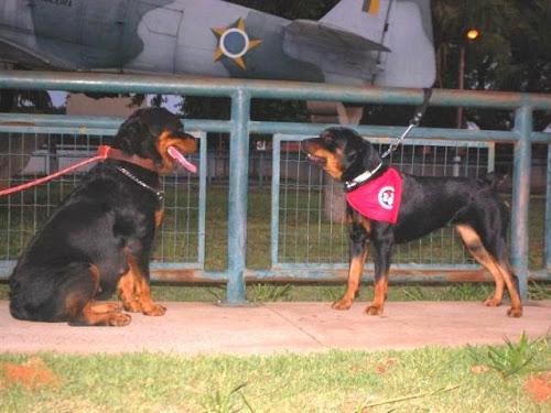 Encontro de cães conhecidos como maus vira atração na Duque de Caxias