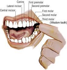 Salivary Gland Problems (salivary gland infection)   saliva
