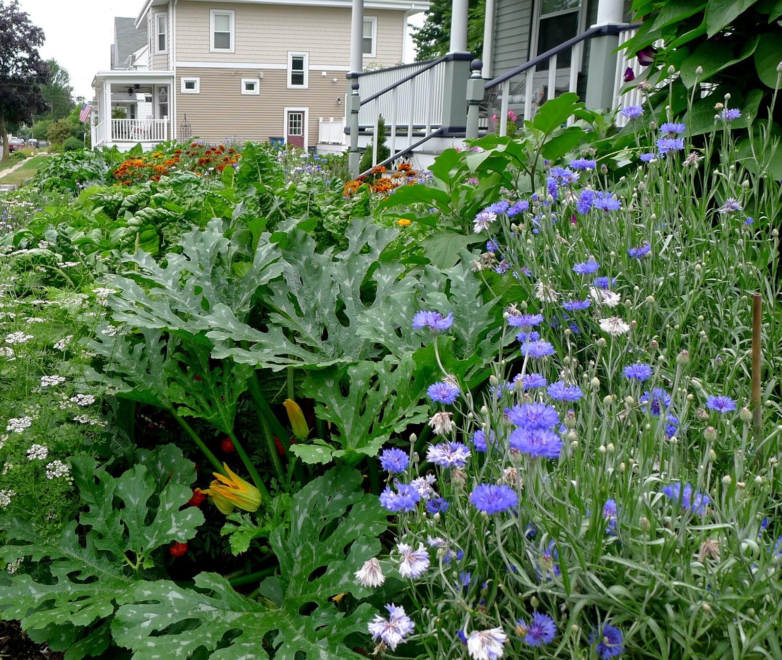 Less Noise, More Green: Edible Landscape Project