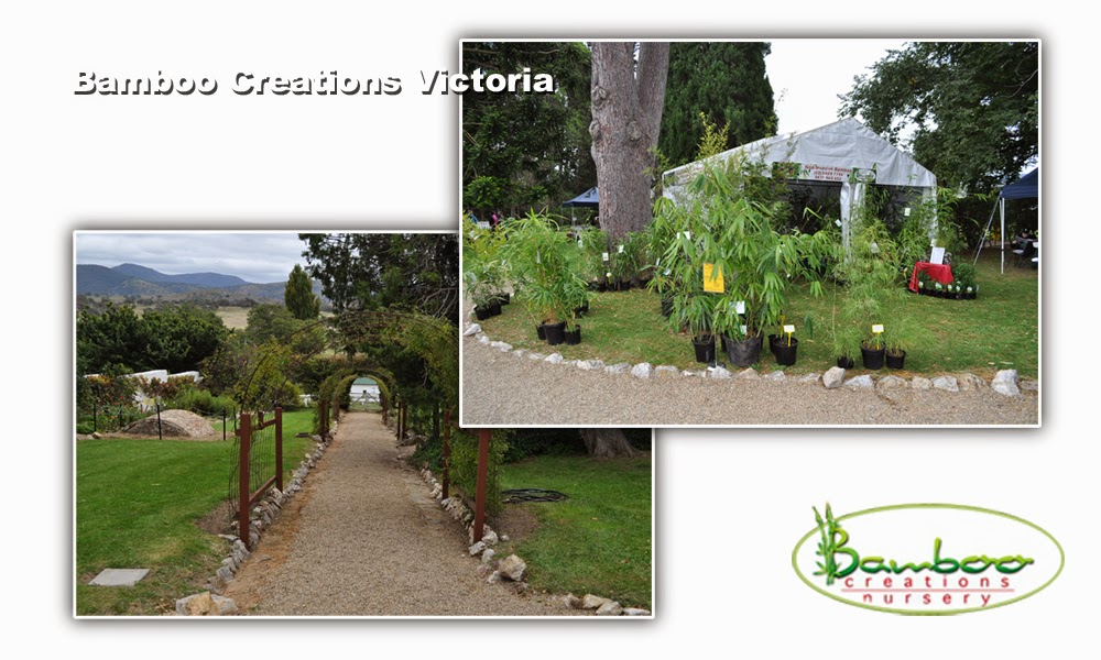 Bamboo Creations at the Canberra Tharwa Collactors Plant Fair