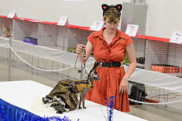 Fashion Show at the National Capital Cat Show