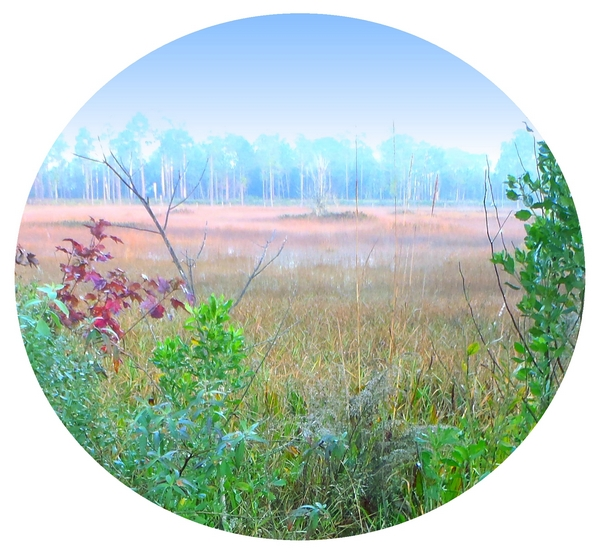 copyright by dear miss mermaid, Kenansville Florida three lakes wildlife management