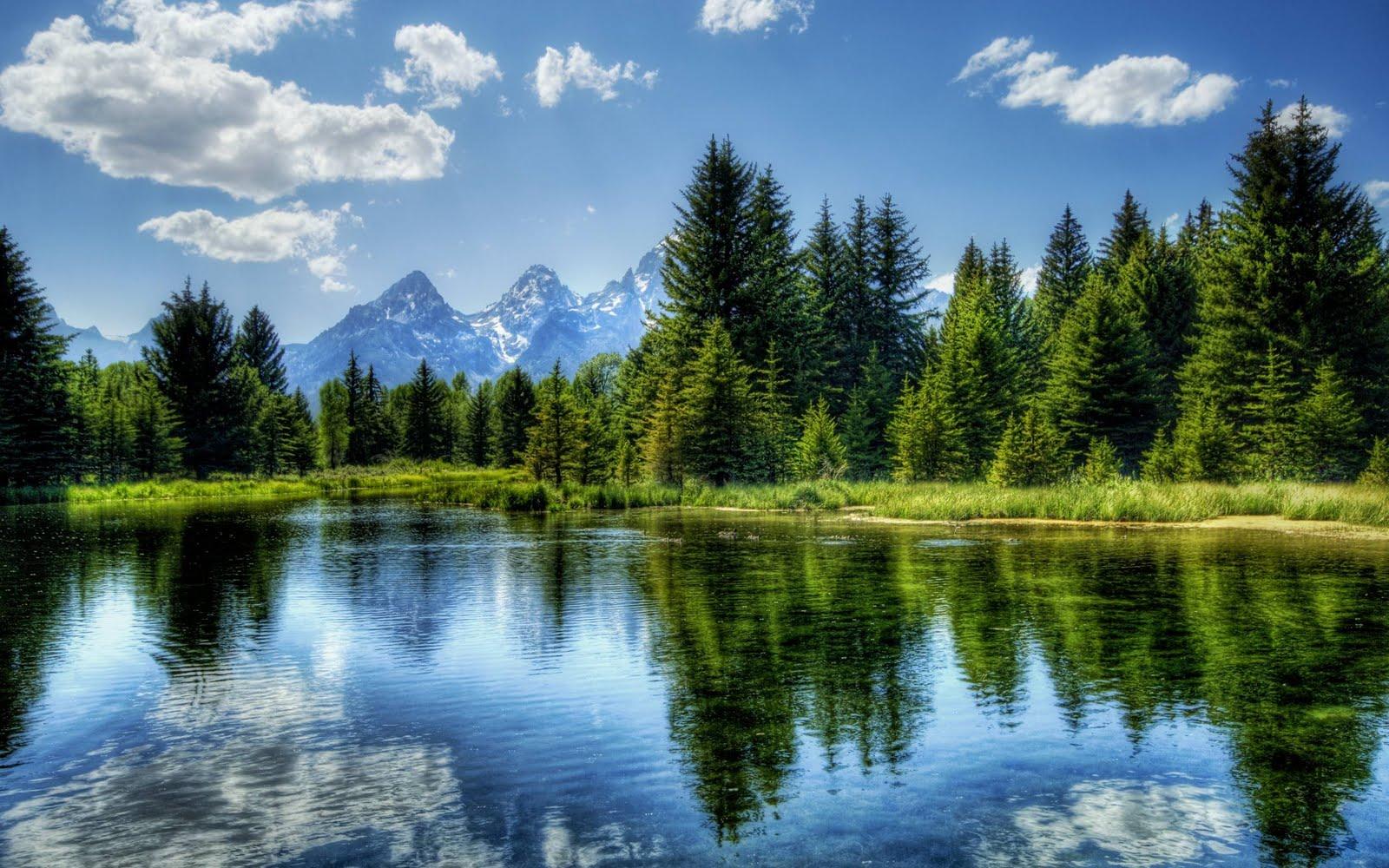 http://1.bp.blogspot.com/-LlUsuvx87zM/Tl-cX6Bhp7I/AAAAAAAACzg/QDzvhFjf48E/s1600/Reflection_on_Water_HD_Nature_Wallpaper_www.Vvallpaper.Net_4.jpg