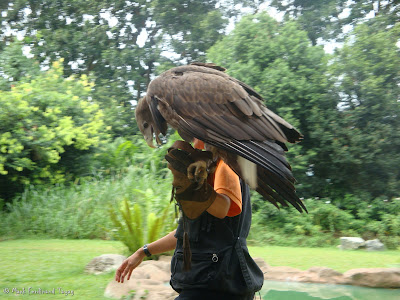 Jurong Bird Park - Kings of the Skies Show Photo 15