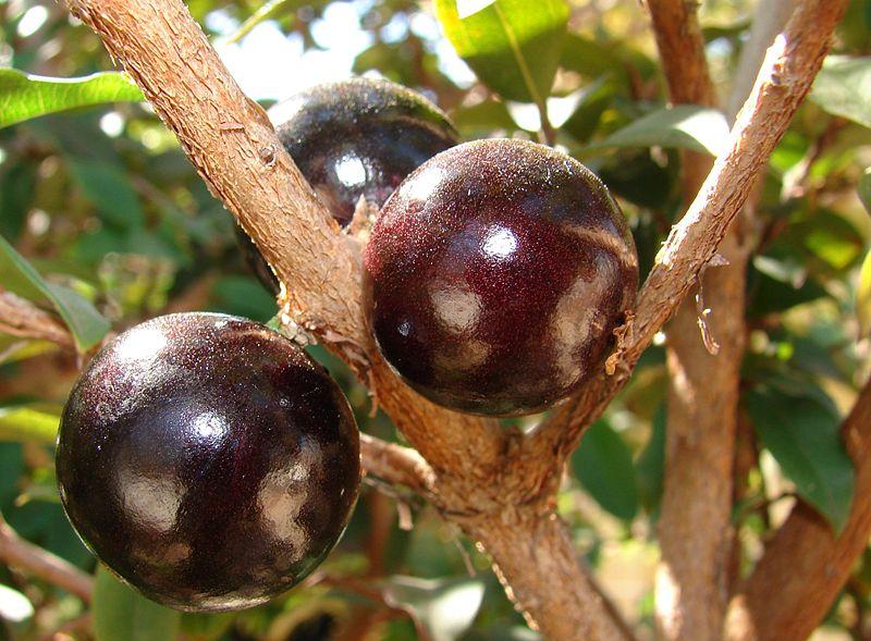 As frutas constituem uma das mais ricas fontes de alimentos,vejá na foto.