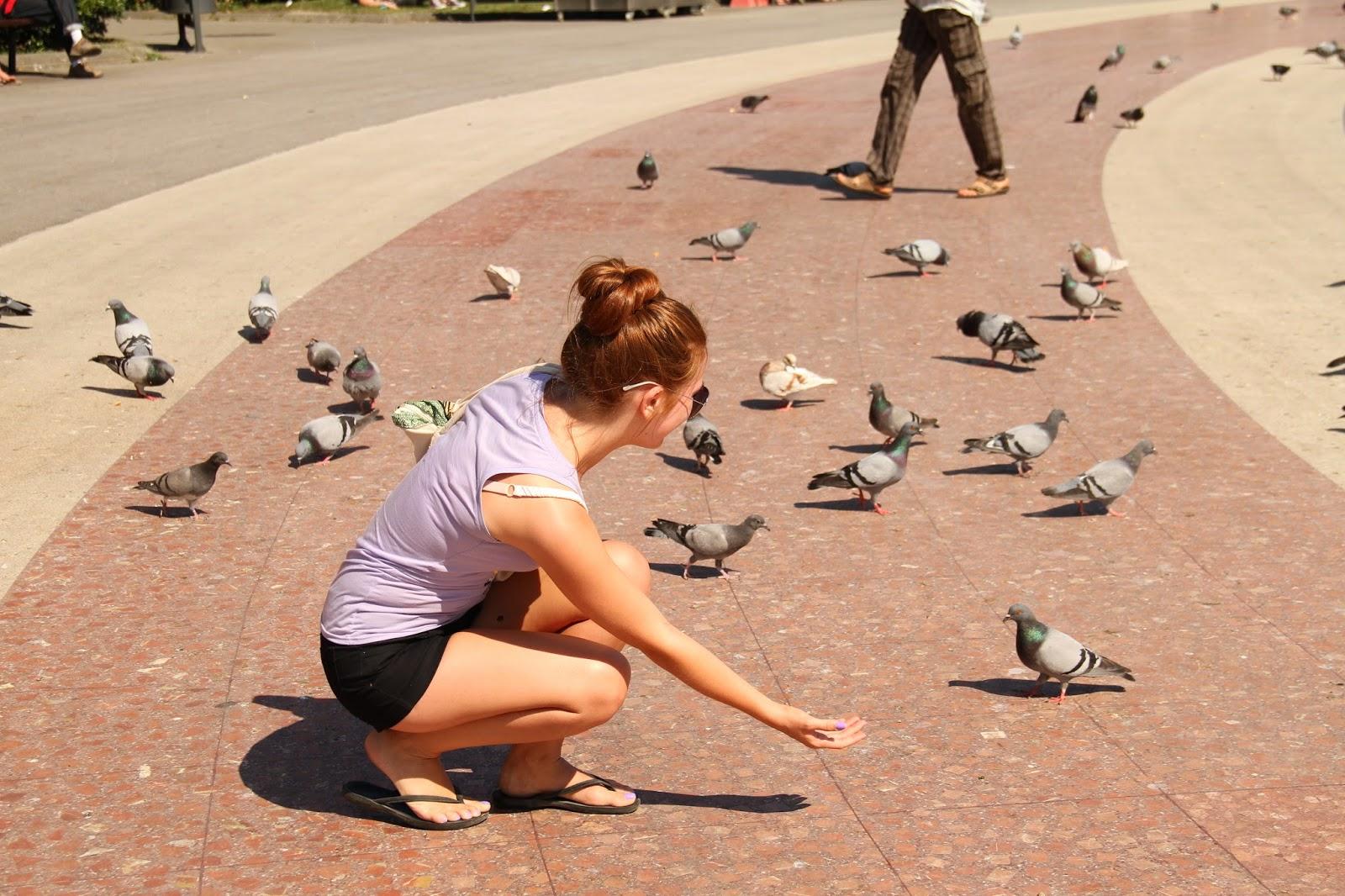 ручные голуби на площади Каталонии