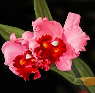 Orquideas Cuadros Pintados Con Orquideas