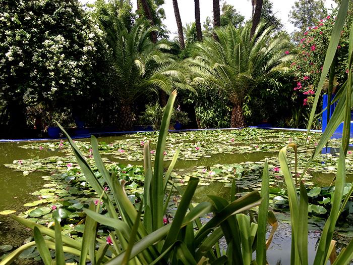 jardin majorelle bassin