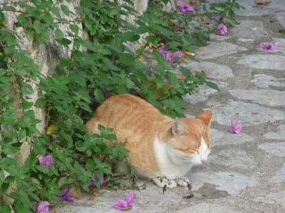 gato tranquilo junto a una pared de piedra y florecillas