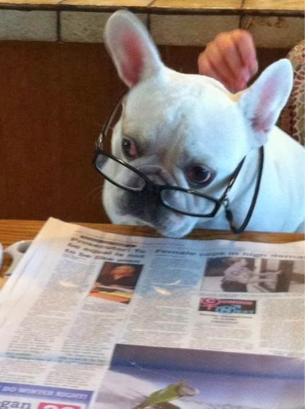 Cute dogs - part 6 (50 pics), dog with glasses reading newspaper