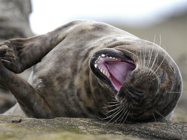 Adoráveis focos são fotografadas rolando de rir em momentos de pura alegria