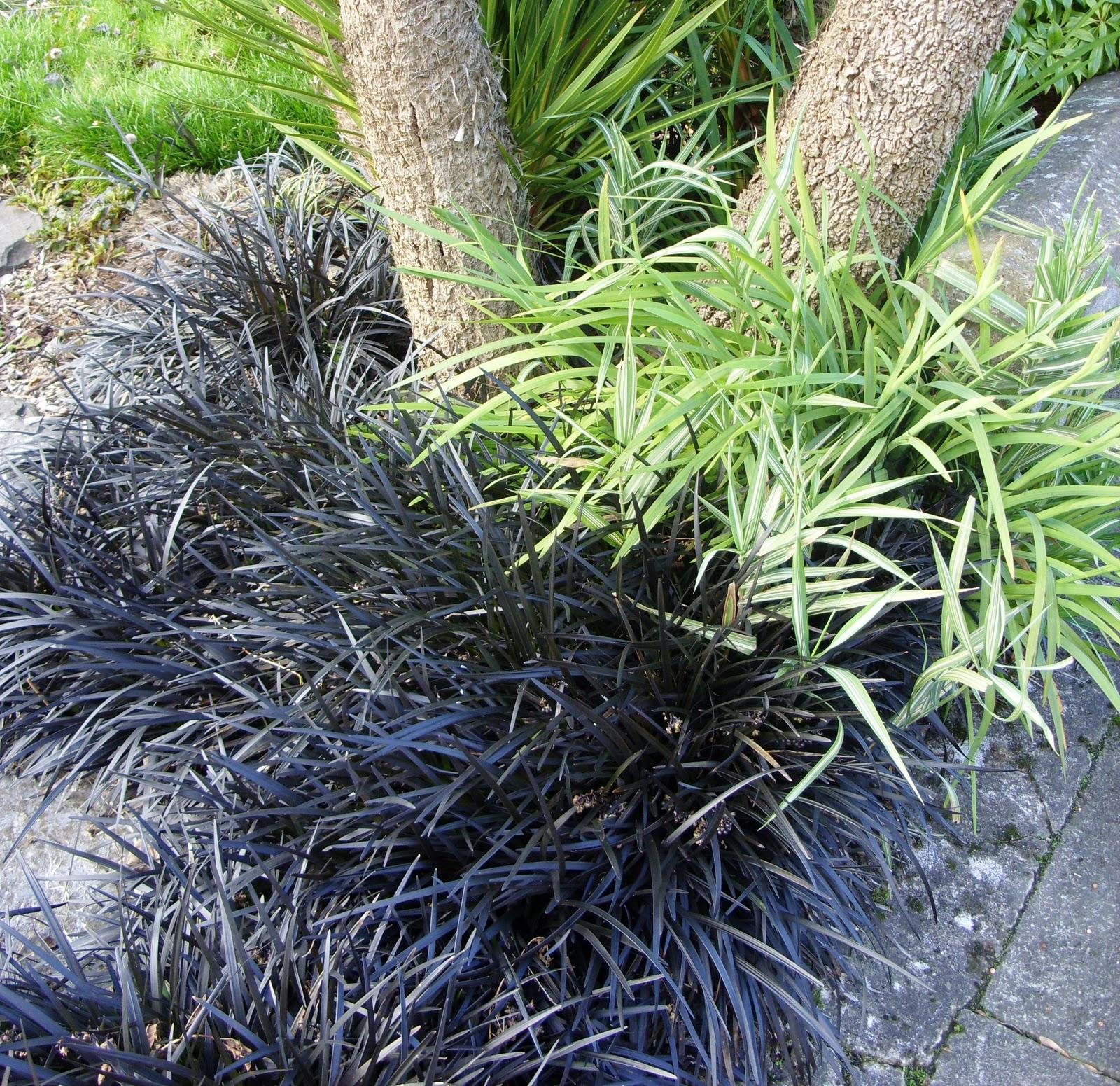 Kellis Northern Ireland Garden Winter Grasses .