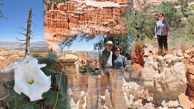 Living waters zion the heart of utah 39 s colorful canyons for Zion motors st george