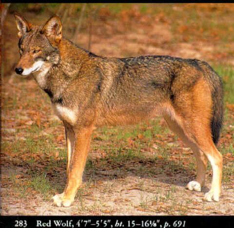 rwolf.jpg