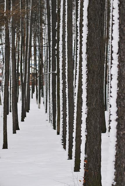 Снежная Лысьва - парк
