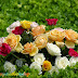 Happy Mothers Day wishes with Flowers photos