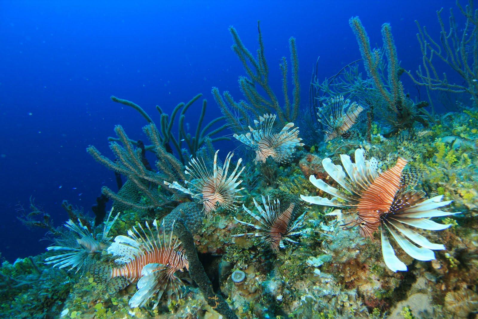 Lionfish Hunter: Grand Cayman Lionfish Safari