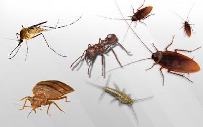 cara mengusir serangga dirumah