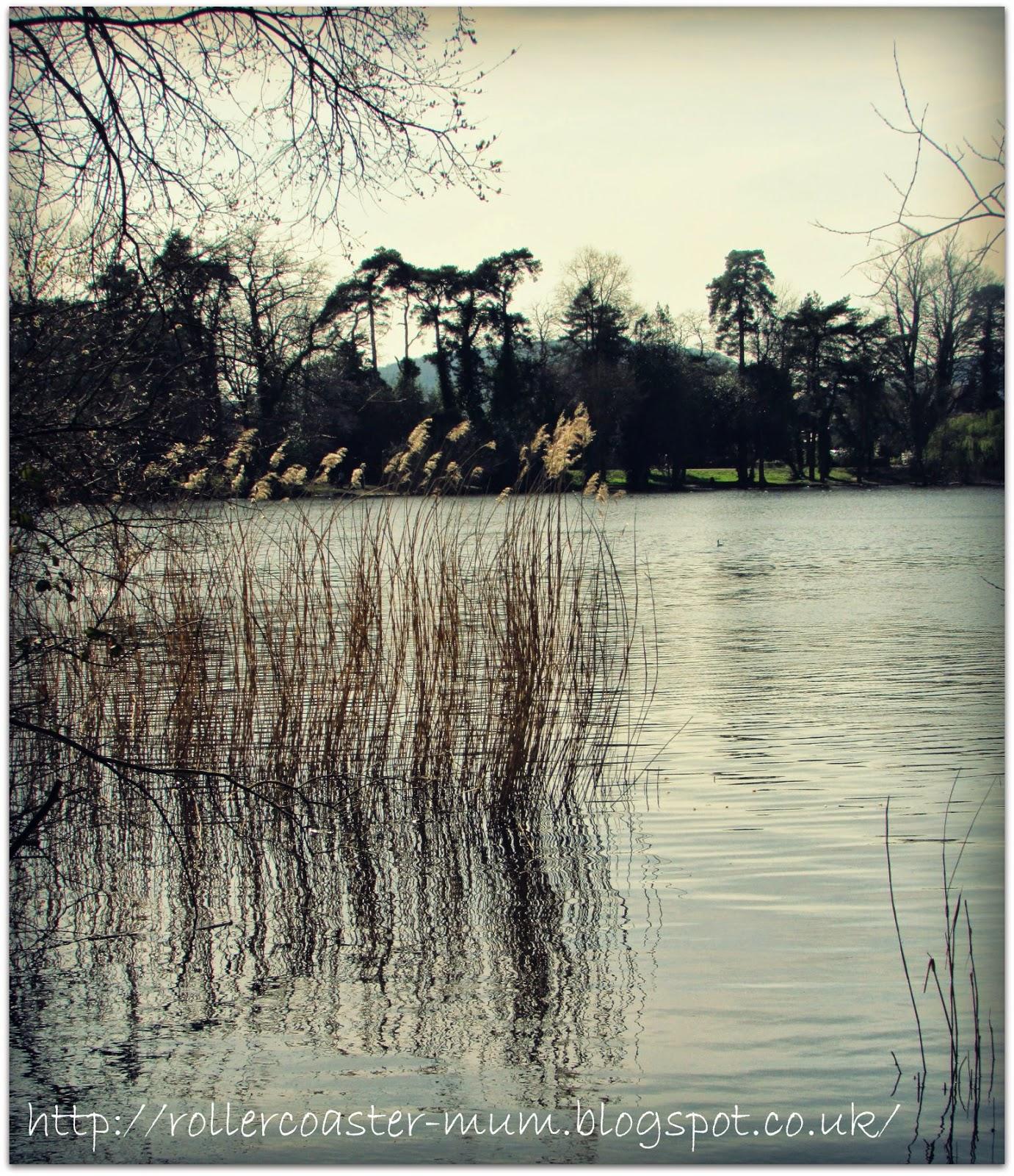 rippling water reeds