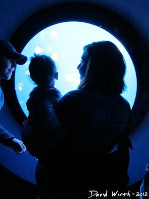 aquarium port hole, shark tank, tennessee