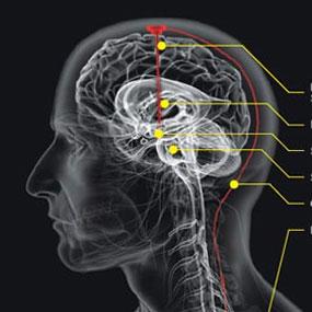 Cara Kerja Otak Manusia