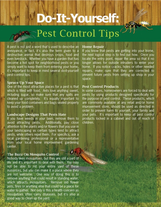 pest control, termite control, bed bugs treatment