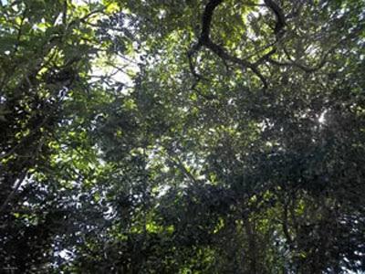 cidades, florestas, árvores