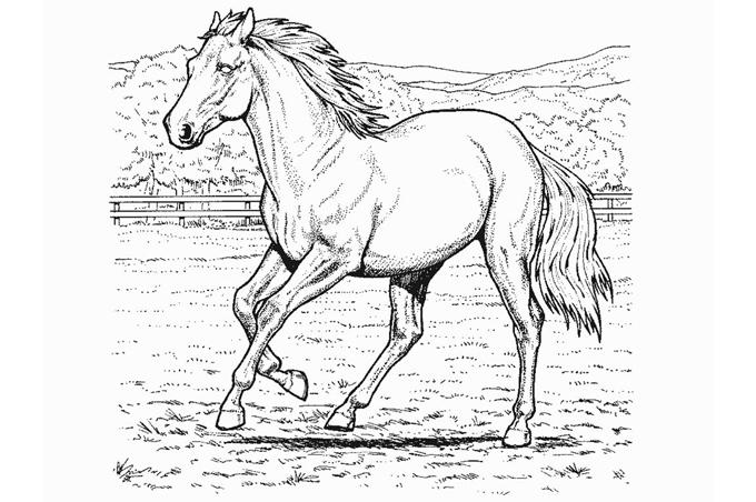 صورة حصان يركض داخل الساحة للتلوين
