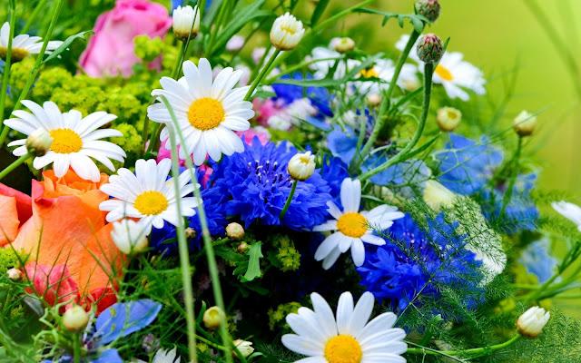 Hình nền khu vườn mùa xuân - ảnh 3